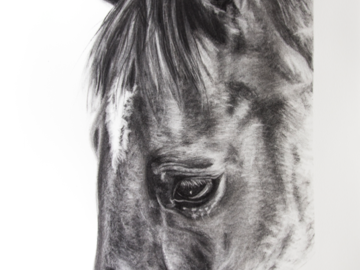 """'Vizkaya' - Throughbred - charcoal on Arches paper, 22x30"""""""