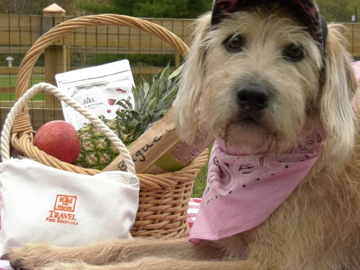 """Still from """"Kiki's Adventure"""" video, featuring our New Travel Kit for dogs"""