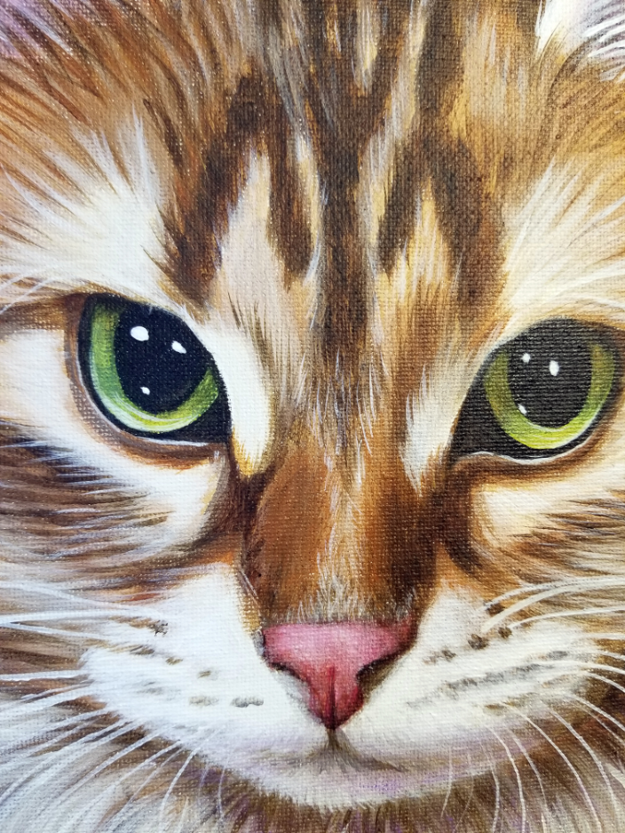 Close up detail of a cat portrait