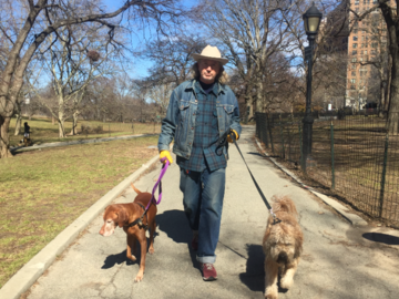 Michael walking Archie & Yogi!