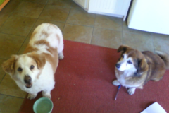 Request Quote: Professional Pet Sitting Svc - Dover, NH