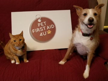 Pet First Aid 4U features a real cat-dog teaching team in their in-person and live ZOOM classes.  Casey and Kona are also certified therapy pets!