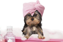 Request Quote: Bark Of The Town Mobile Grooming - Las Vegas, NV