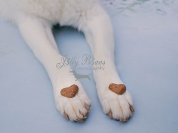 Photo of dog paws with heart shaped cookies.