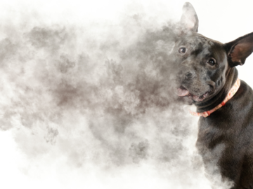 Photograph of a dog disappearing into smoke.