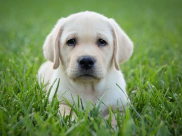 Puppy in Long Branch, NJ