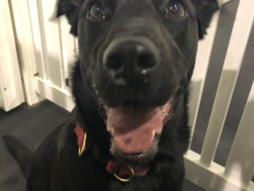 Happy Happy Pups!
