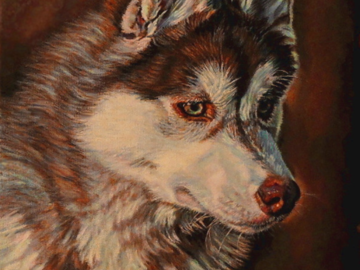 """""""Axel"""" ~ Red Siberian Husky (Commission)"""