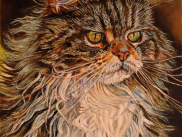 """""""Native Mainer"""" ~ Maine Coon Cat"""