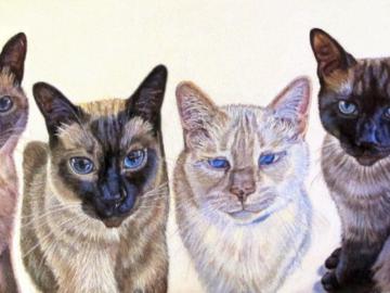 """""""The Four Duncans"""" ~ Siamese Cat (Commission)"""