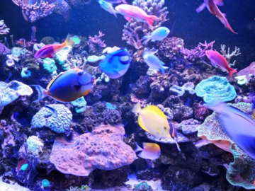 Saltwater fish and corals service