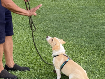 Training Puppy to stay