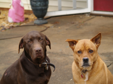 Two of my pets that have since passed Moses and Shadow