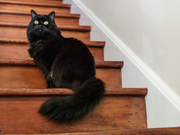 black cat sitting on stairs