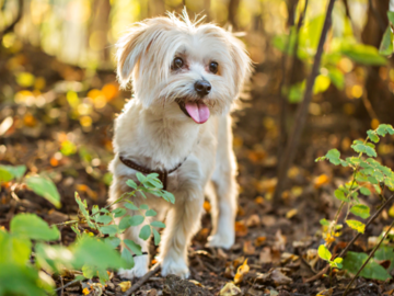 Small white dog in nature