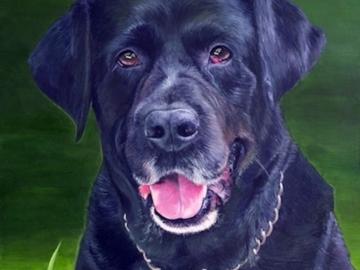 portrait of black lab Cooper