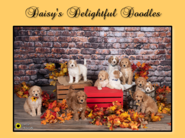Litter puppy portraits, sell your pups with our adorable pictures!