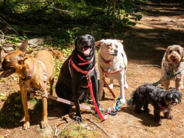 Trail Walk!