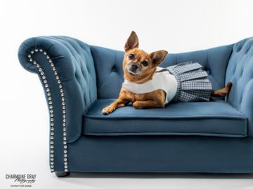 Ruby, Chihuahua model