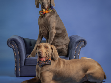 Weims - Which one is serious and which one is silly?