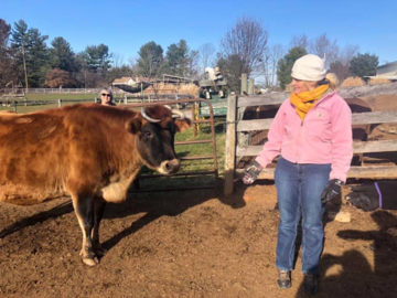 Rescue Cow practice session