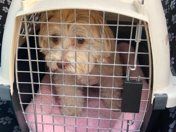 We can transport pets to vet or groomer