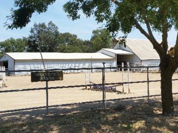 Hunter Ring and Barns   Shandoni Ranch