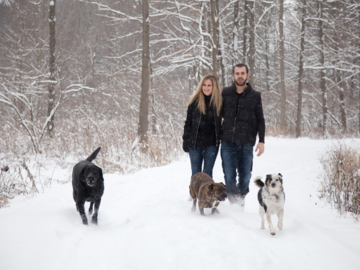 winter family with 3 dogs