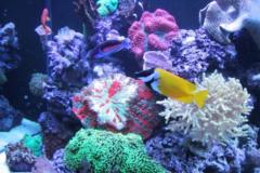 Request Quote: Aquarium Doctor Inc.  - HUNTINGTN BCH, CA