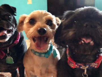 Chloe, Milo and Bode! The happiest of trios!