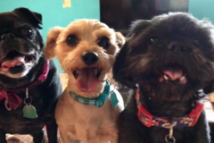 Request Quote: Creature Comforts Pet Sitting Service - Sierra Vista, AZ