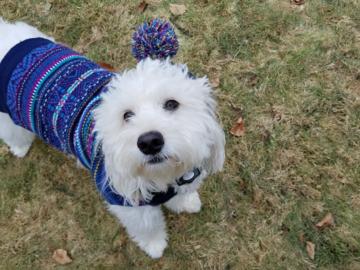 customer's dog