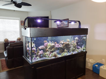 180 Gallon Reef