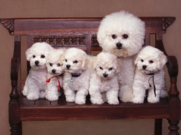 A portrait of a dog and her puppies.
