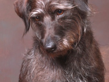 A portrait of a brown dog.