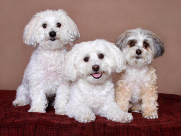 A portrait of three cute dogs