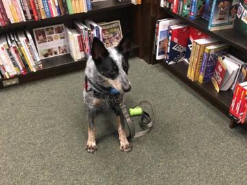 Service Dog training at Barnes & Noble