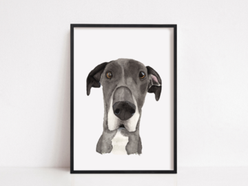 Great Dane Pet Portrait