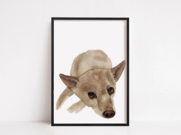 Chihuahua Pet Portrait