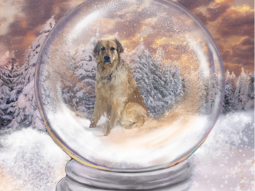 Your Pet in a Snow Globe! (digital painting on paper)