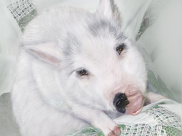Tucker the Pig (digital painting on paper)