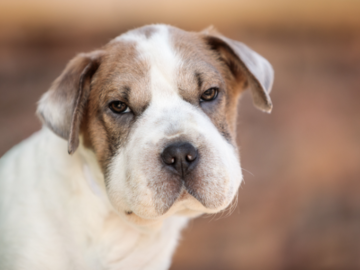 Dog Photography Portrait