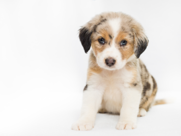 Puppy Photography Portrait