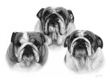 Bulldogs oil painting on paper