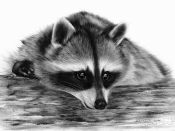 Raccoon oil painting on paper