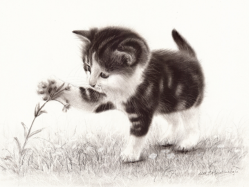 Cute Kitten oil painting on paper