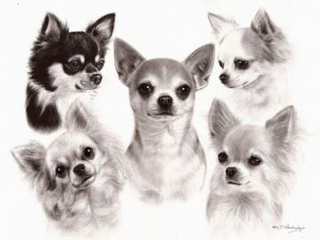 Chihuahua Oil painting on paper
