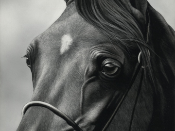 """12""""x12"""" portraiture of an Arabian Horse in Scratchboard - this is a drawing, not a photo!"""