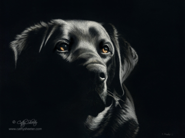 """11""""x14"""" Scratchboard Portrait if a Labrador Retriever - This is a drawing, NOT A PHOTO!"""