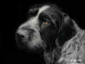 """11""""X14"""" Scratchboard Drawing of a Wire Haired Pointer.  This is a drawing, NOT A PHOTO!"""